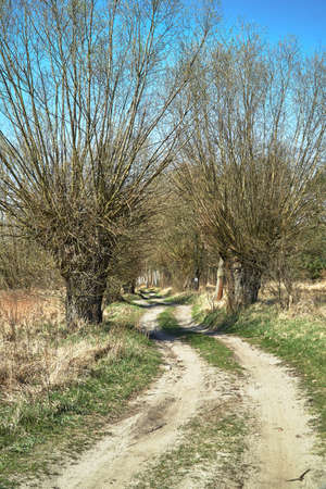 Rural landscape with dirt road and a willow in spring in Poland Stock Photo