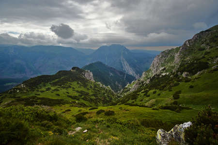 A mountain slope with a mountain pine and limestone rocks in the mountains Tatry in Poland