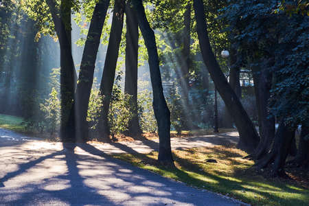 Trees in the early morning in Poznan Stock Photo