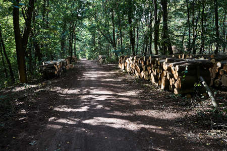 A pile of cut tree trunks and a Forest Road in Poland