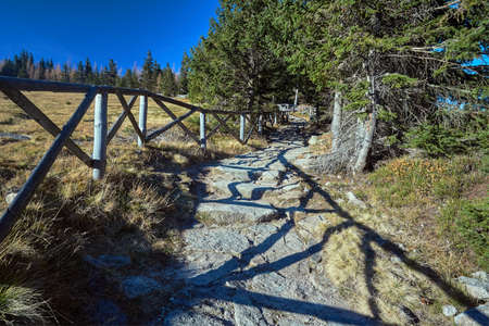 the tourist trail in the Coniferous Forest in the Giant Mountains in Poland Stock Photo