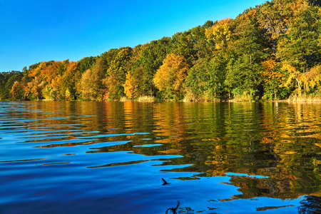 Colorful trees on the lake during autumn in Poznan