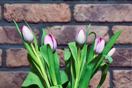 Glass vase with pink tulips on a background of a red brick wall Stock Photo
