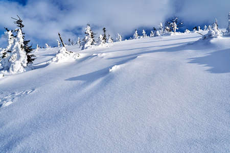 Buried in snow forest in the Giant Mountains in Poland Zdjęcie Seryjne