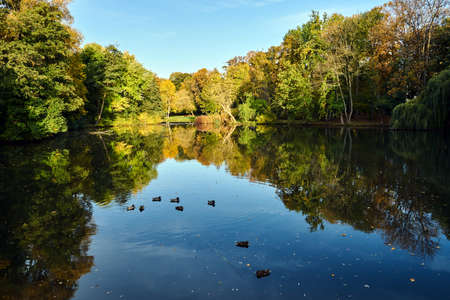 Ducks swimming on a park pond during fall in Poland 版權商用圖片 - 157965719