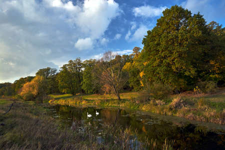 Landscape with swans swimming on the pond and a dry tree during autumn in Poland Reklamní fotografie