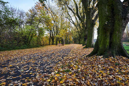 trees and a leafy alley in a park during autumn in Poland