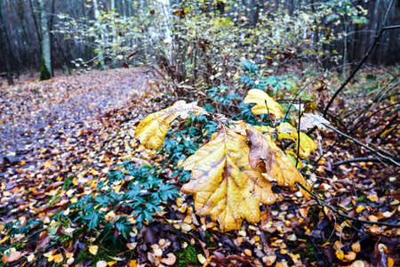 leaves in a deciduous forest during fall in Poland