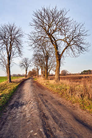 A dirt road paved with stones and deciduous trees during autumn in Poland