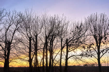 tree crowns against the sky after sunset in autumn in Poland Stock Photo