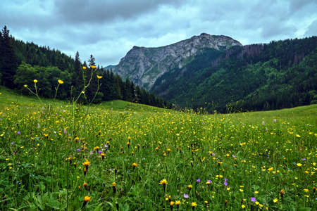 Colorful flowers blooming on a spring meadow in the mountains Tatra in Poland