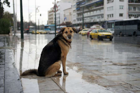 Homeless dog sitting near the road under the rain photo