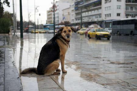 Homeless dog sitting near the road under the rain Imagens