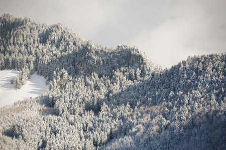 rocky peak: Rocky peak with trees covered with snow in Switzerland