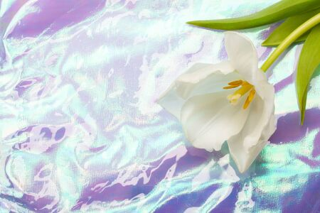 White blooming tulip on a real light rainbow holographic crumpled texture background.