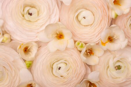 Light floral composition of natural fresh ranunculi and freesia in a pastel pink-cream colour. Reklamní fotografie