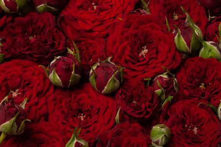 Bright floral composition of natural fresh dark rose and freesia in a dark red color.