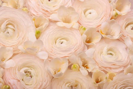 Light floral composition of natural fresh ranunculi and freesia in a pastel pink-cream color.