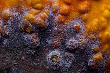 Beautiful black mold on the surface of the orange pumpkin.