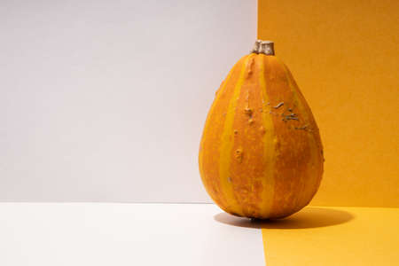 Creative composition with decorative pumpkin paper background.