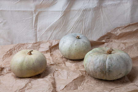 Real fresh gray pumpkin on paper background with fabric drapery.