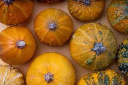 Natural decorative pumpkins on an orange background.