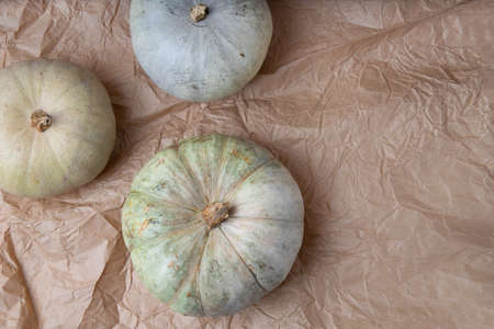 Composition in natural trendy shades. Real fresh gray pumpkin on paper background.