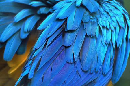 feathers of a young bird