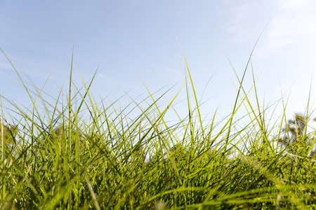 green grass in summer Banco de Imagens