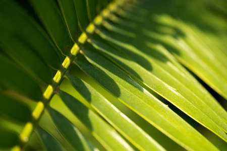 Texture of a green leaf as background Banco de Imagens