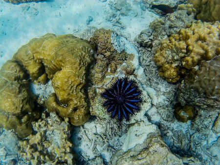 The incredible underwater world of Thailand in the Adaman Sea Zdjęcie Seryjne