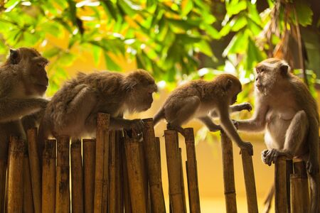 Monkeys in the forests of Thailand