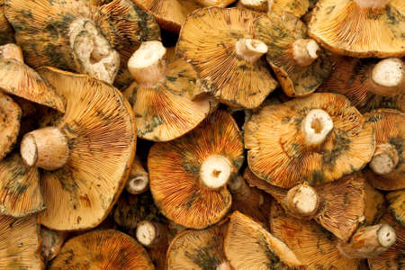 stipe: Fresh red pine mushrooms on a counter of a market Stock Photo