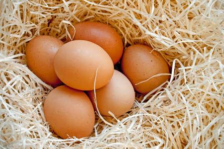 gallina con huevos: Huevos de gallina fresco media docena de paja