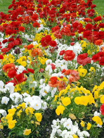 Flower of town-flowerbed in the street of Madrid photo