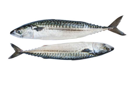 Two fresh mackerel isolated over white background photo