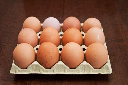 gallina con huevos: Docena de huevos frescos de gallina marr?n