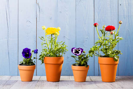 flower bed: Flowers in pots ready for transplanting
