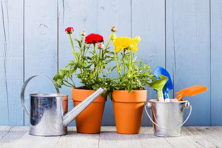 Bloemen in potten klaar voor het transplanteren Stockfoto - 38203155