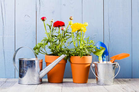 transplanting: Flowers in pots ready for transplanting