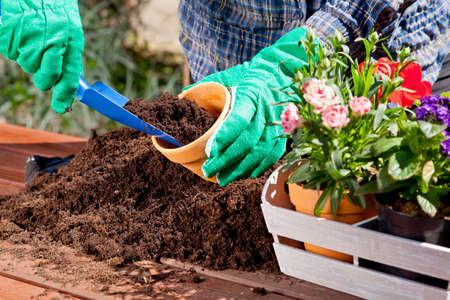 vegetable garden: Planting flowers in the garden home Stock Photo
