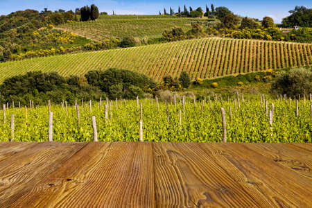 tuscany: Vineyard near Montalcino, Tuscany, Italy Stock Photo