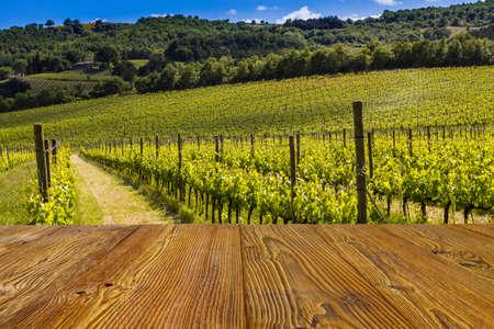 viñedo: Toscana viñedo con palos como fondo.