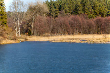 underbrush: frozen lake