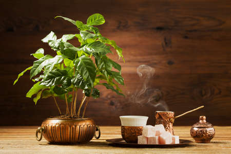 coffea: Traditionally brewed Turkish coffee. Specified in the original containers with Turkish delight. Coffea tree in the background Stock Photo