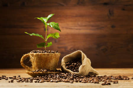 Coffee tree grows out of a cup of coffee beans. Banco de Imagens