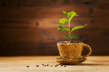 arbol de cafe: Coffee tree grows out of a cup of coffee beans. Foto de archivo