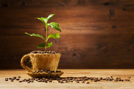 Coffee tree grows out of a cup of coffee beans. Stock Photo
