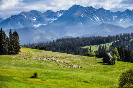 View of Tatra mountains in spring.