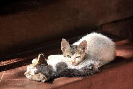 Kittens in morning sun